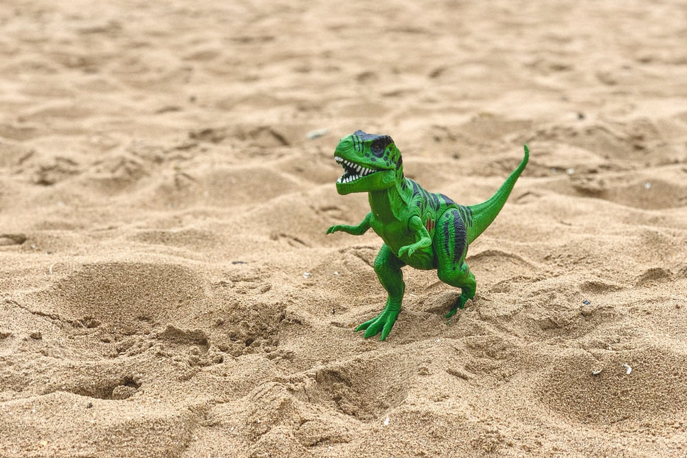 green and white lizard on brown sand