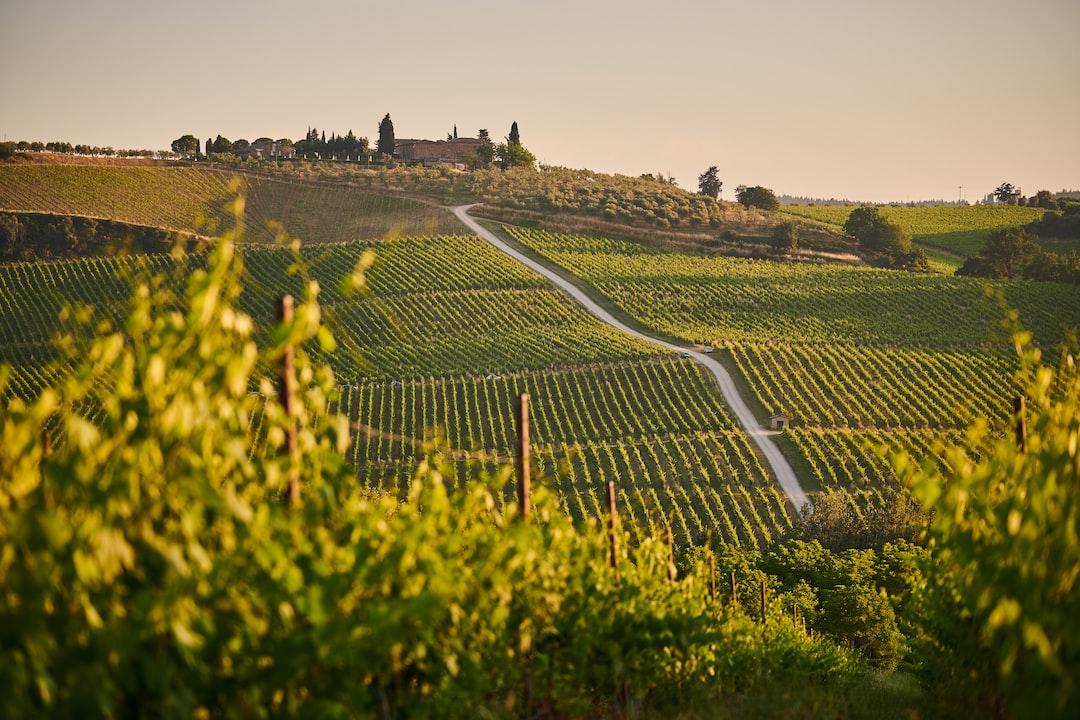 Italien vineyard landscape during sunset. In Tuscany