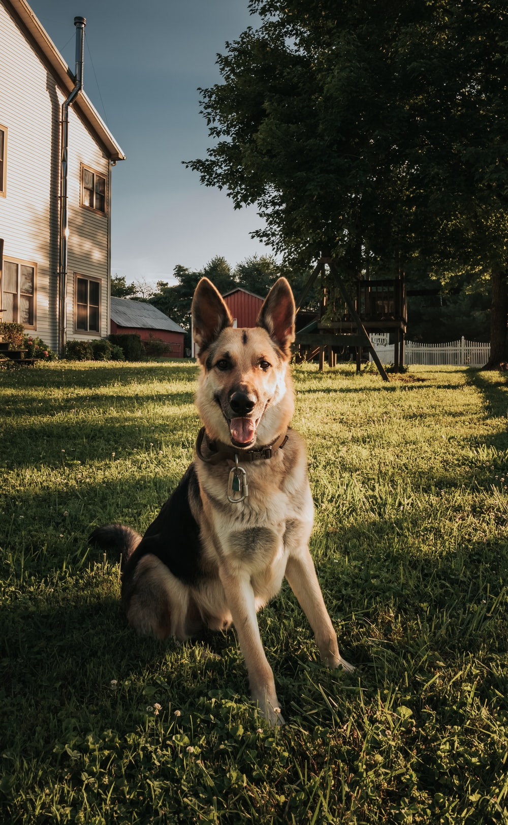 brown and black german shepherd on green grass field during daytime