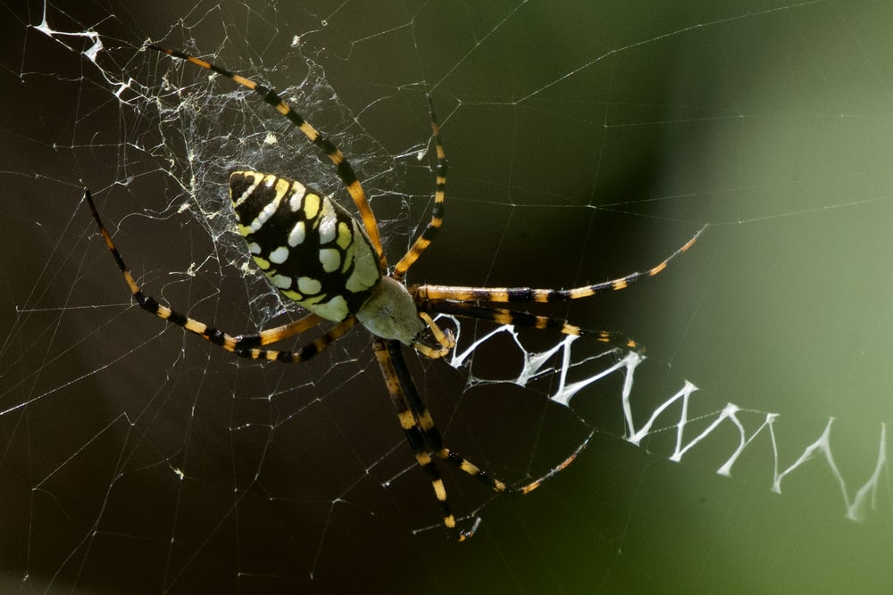 yellow and black spider on web during daytime