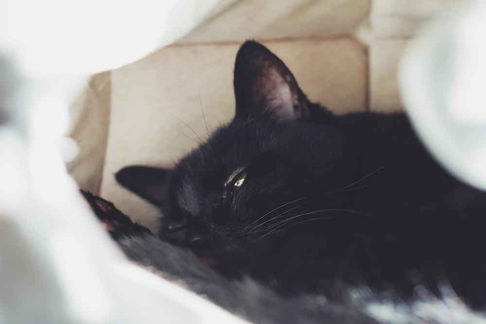black cat lying on white textile