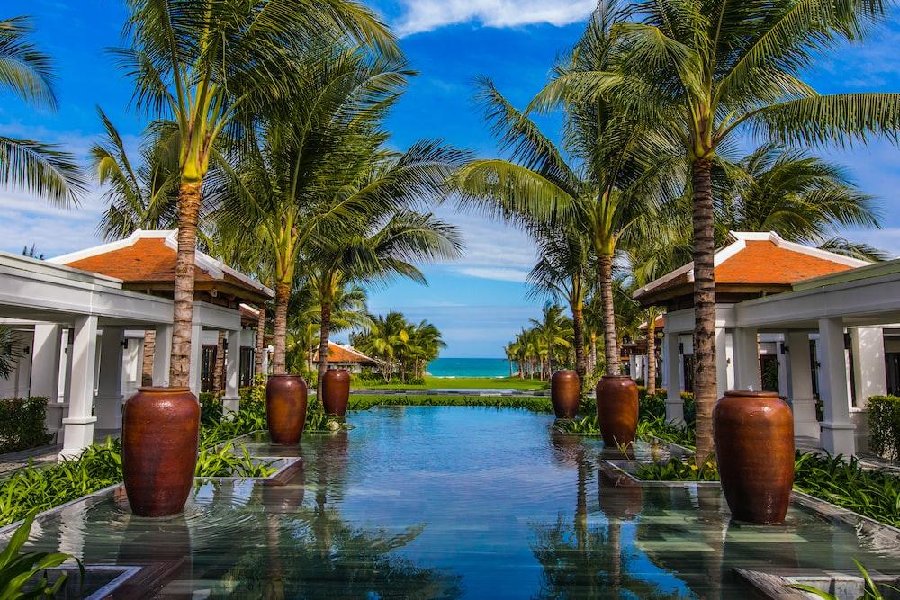 palm tree near swimming pool during daytime