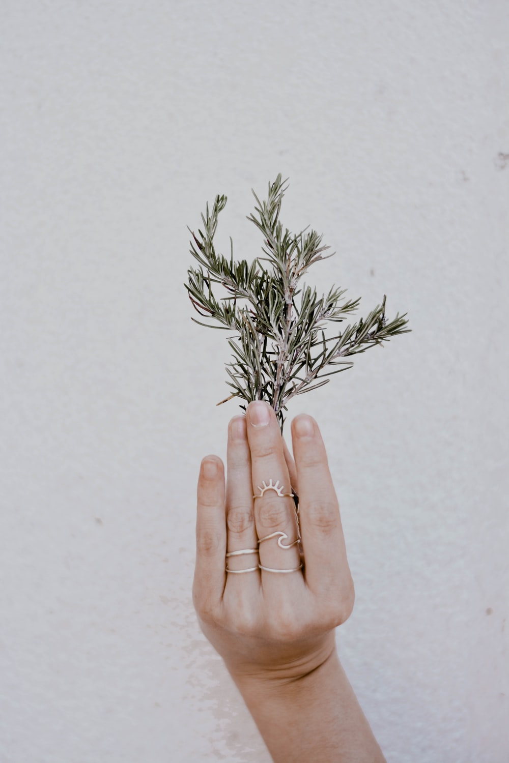 person holding green plant on white background