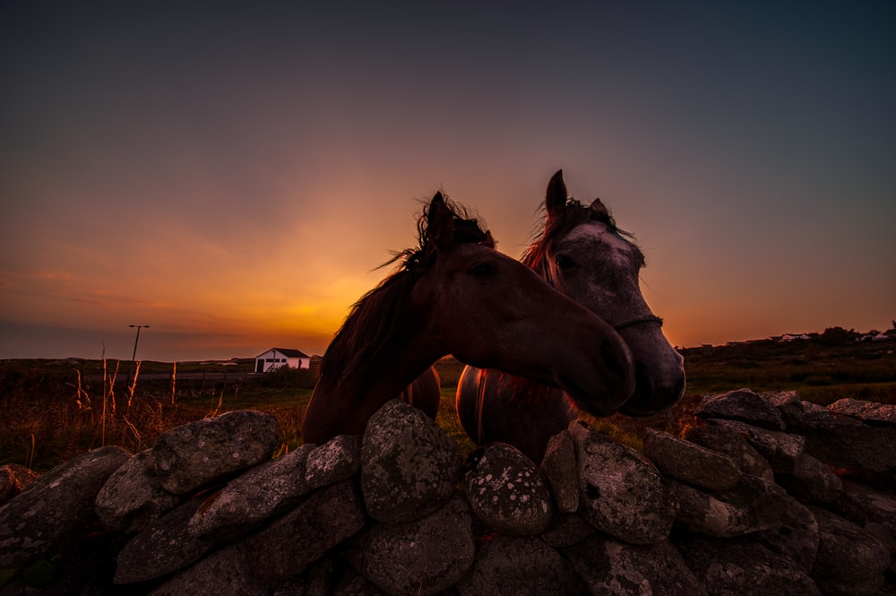 brown horse on rocky ground during sunset