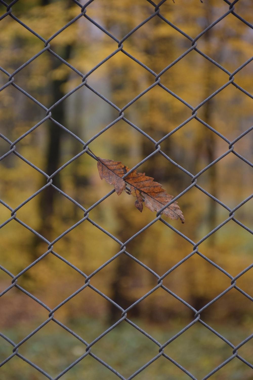 brown dried leaf on gray metal fence