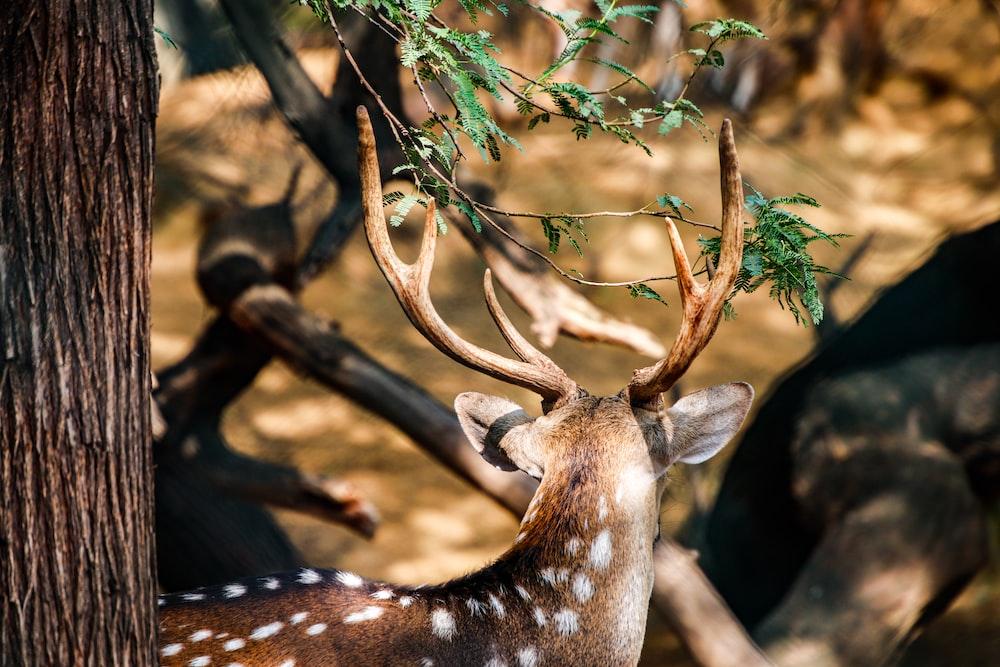 brown and white giraffe eating green leaves