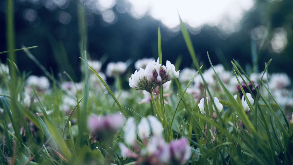 white and purple flower on green grass field