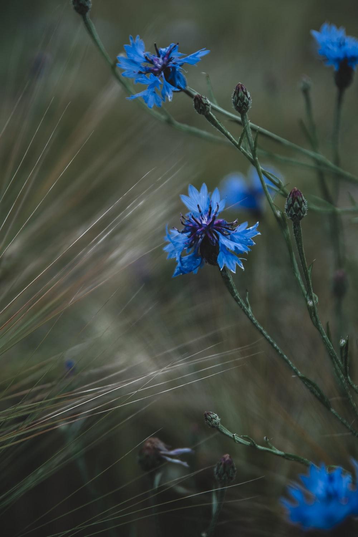 blue flower in shallow focus lens