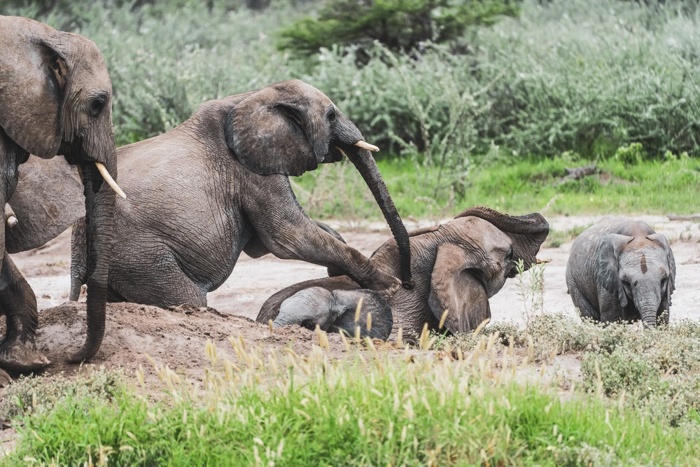 elephant and calf on green grass during daytime
