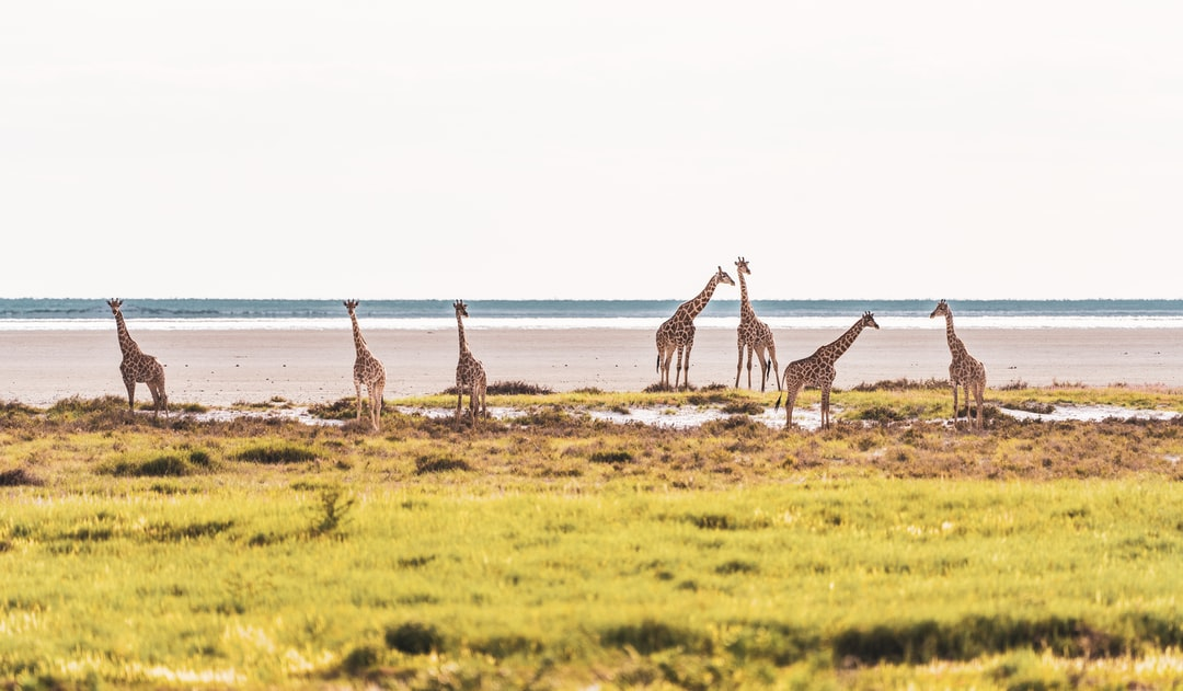 Namibian wildlife in their natural habitat. February 2020.
