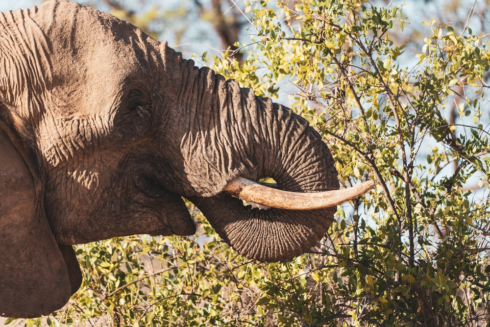 elephant eating grass during daytime