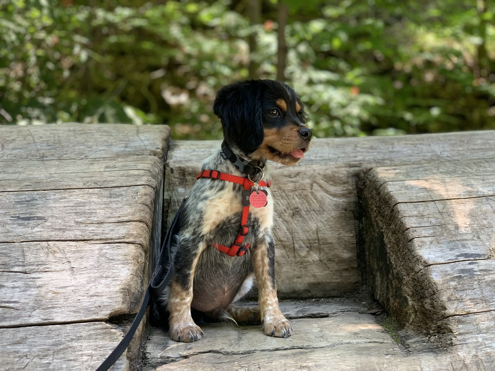 black and brown short coated puppy on brown wooden fence during daytime