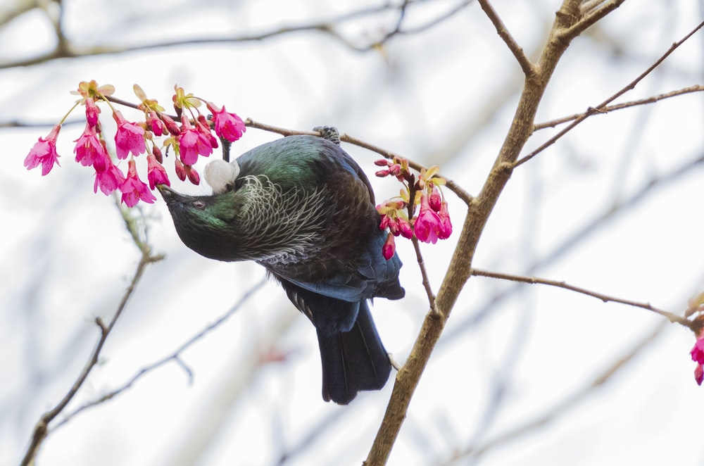 green and black bird on tree branch