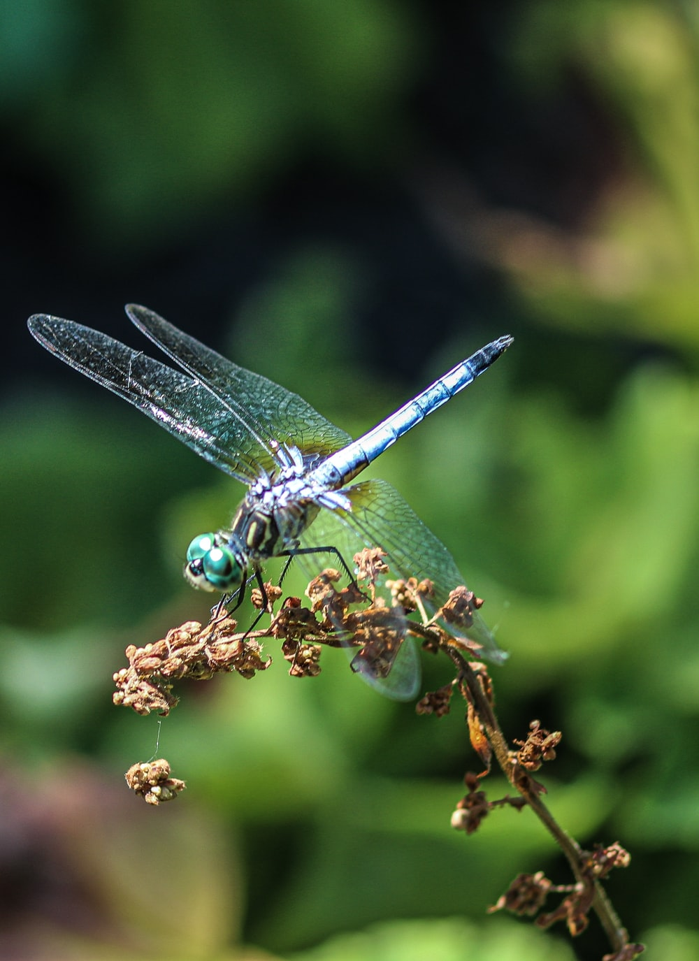 blue and white dragonfly perched on brown plant stem in close up photography during daytime