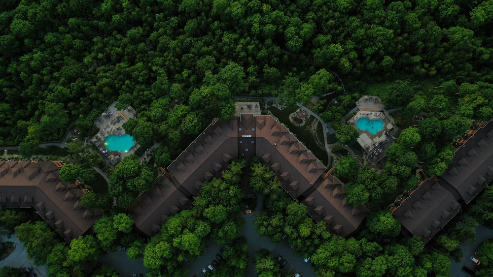 aerial view of green trees and green plants