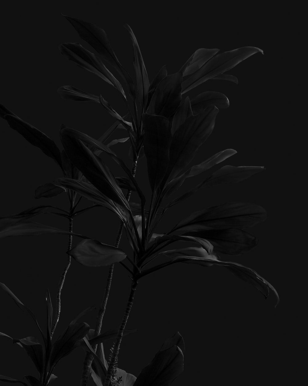 grayscale photo of flower in bloom