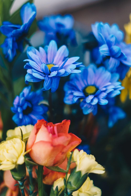 pink and blue flowers in tilt shift lens