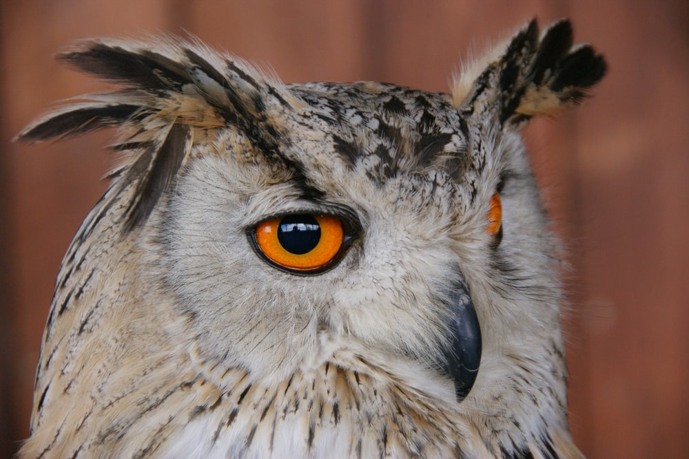 white and brown owl in close up photography