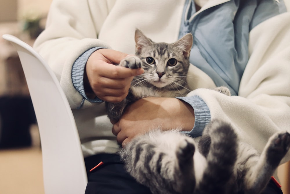 person holding silver tabby cat