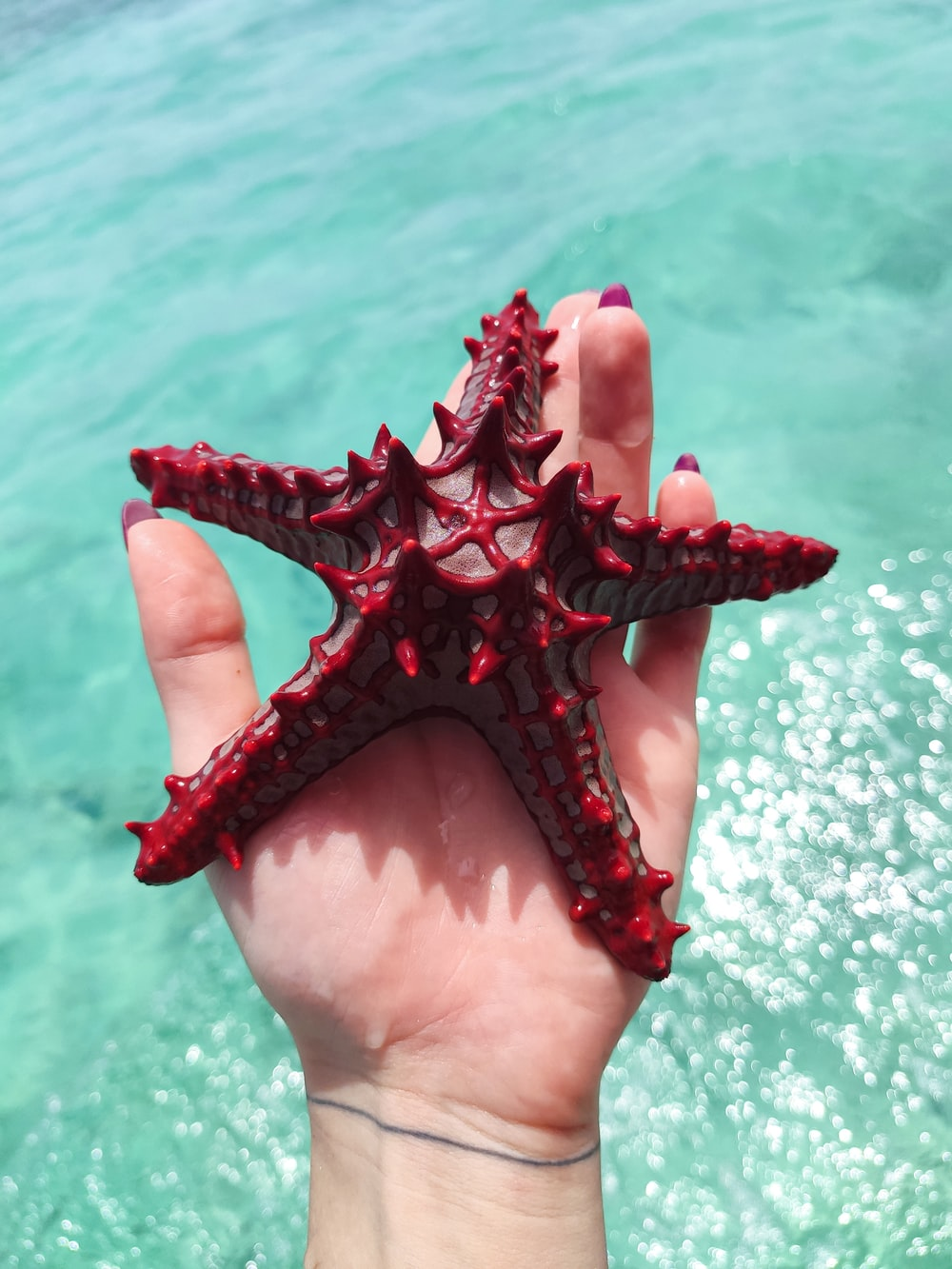 person holding red starfish during daytime