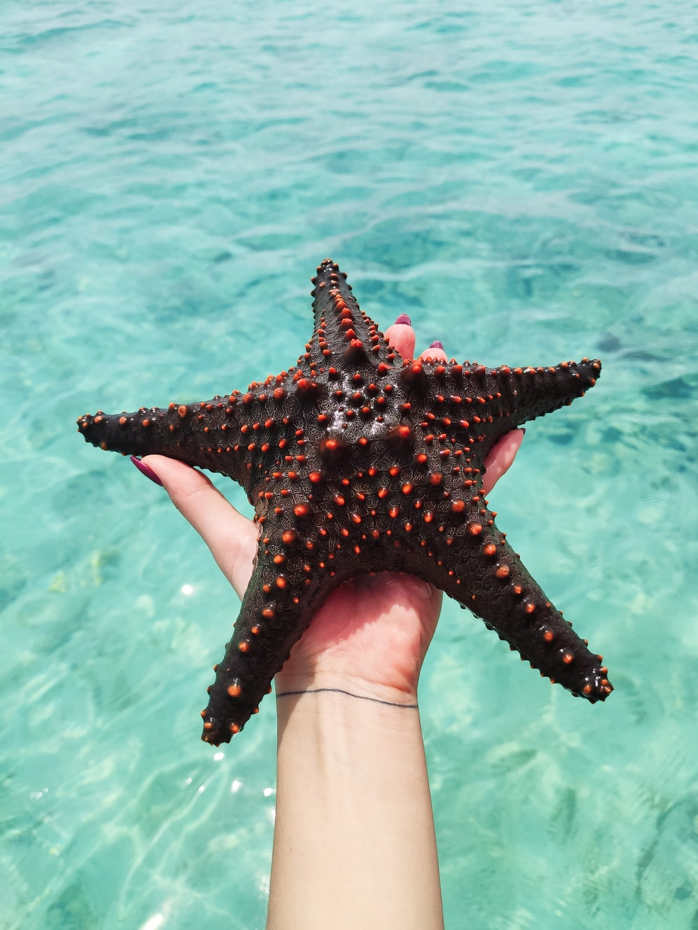 person holding red starfish in water