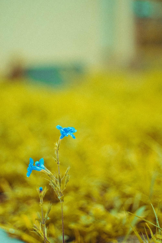 blue flower in the field