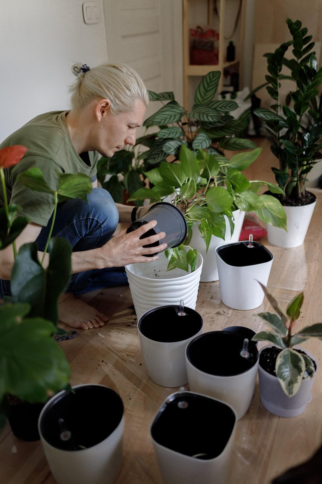 Gardening, planting at home. Man relocating houseplants