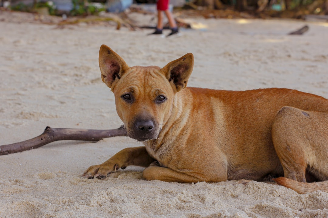 One of the cute dogs on the beach.