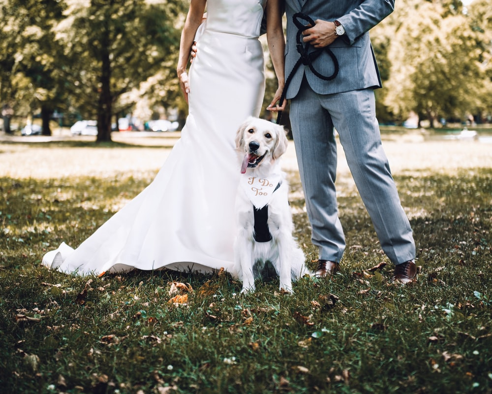 man and woman holding white short coated dog