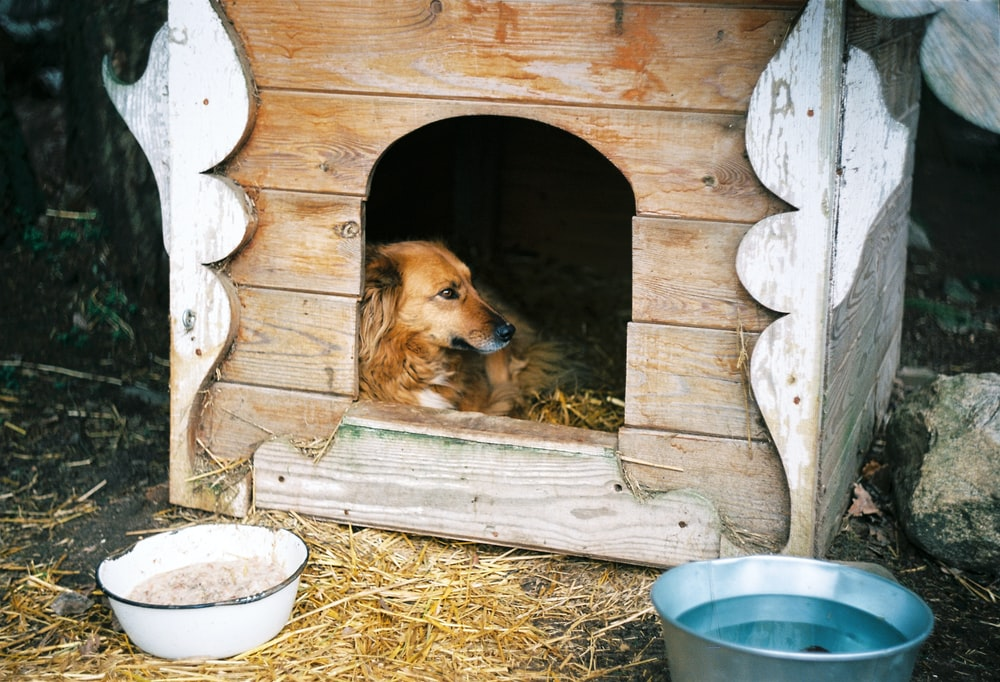 brown long coated dog in brown wooden pet cage