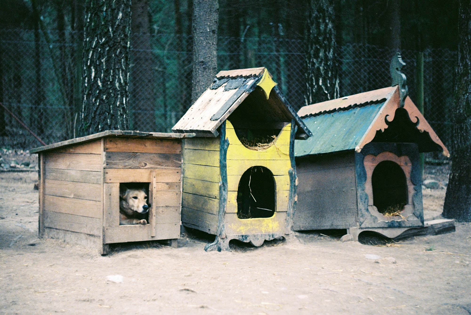 building doghouses