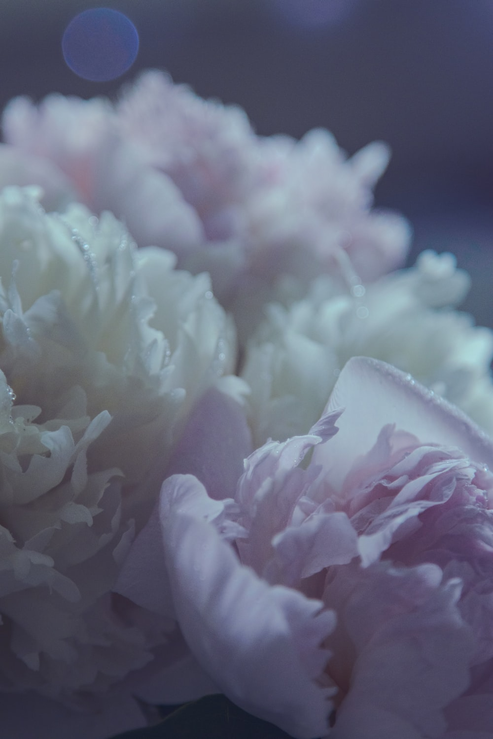 white and pink flower petals