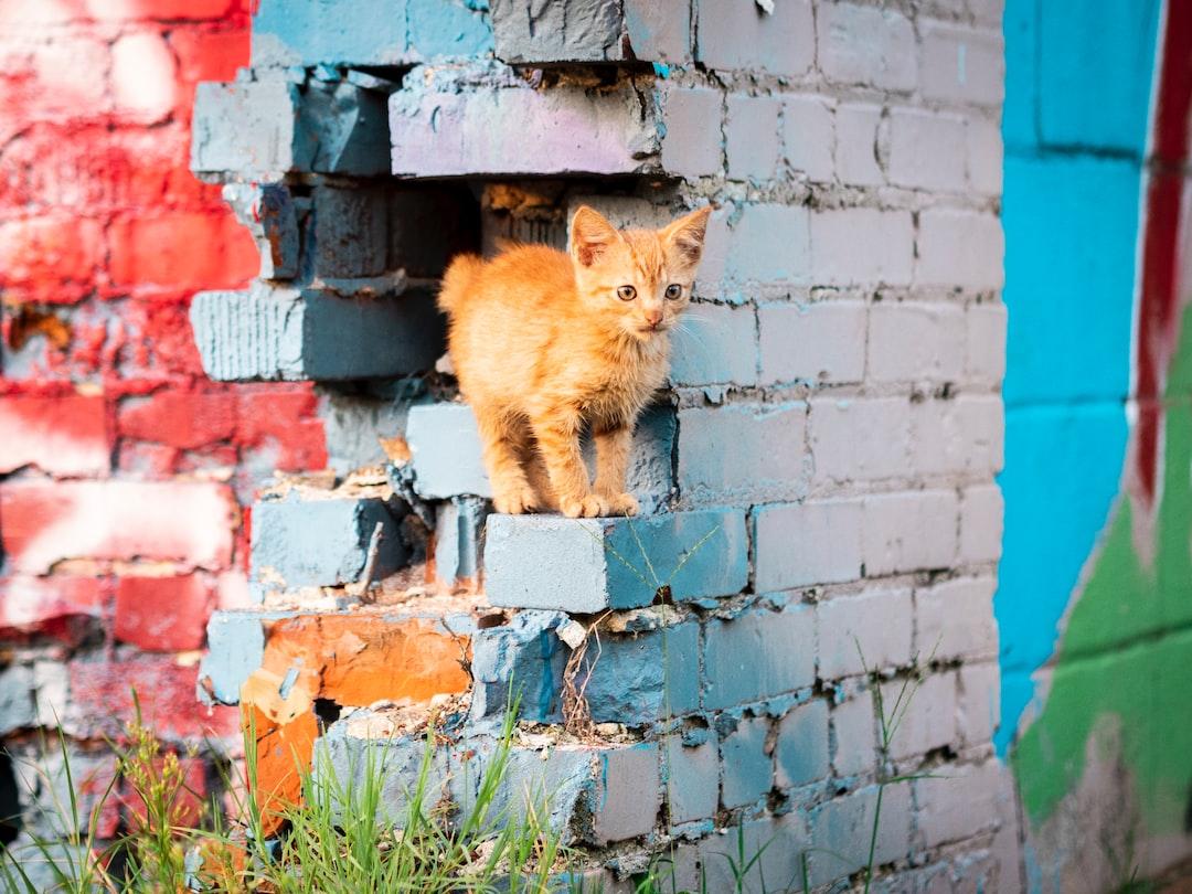A golden kitten surrounded by debris.