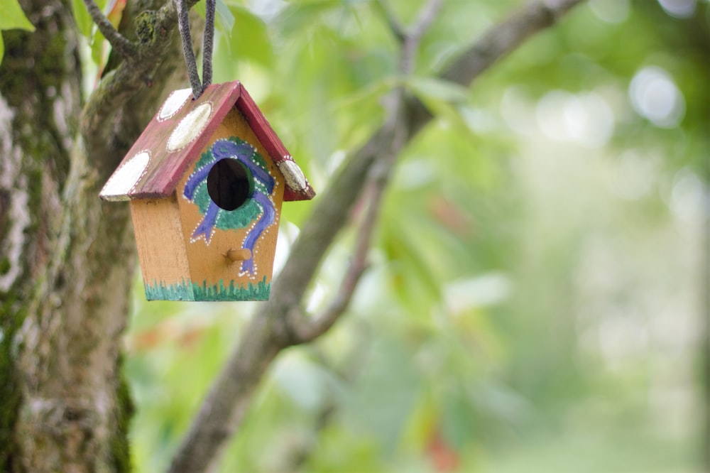 blue and brown wooden bird house