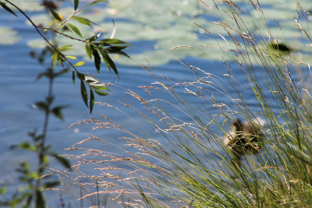 green plant near body of water during daytime