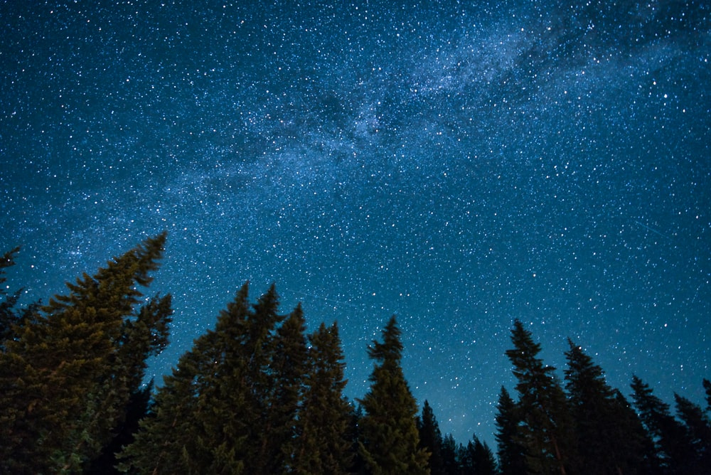 green pine trees under blue sky with stars during night time