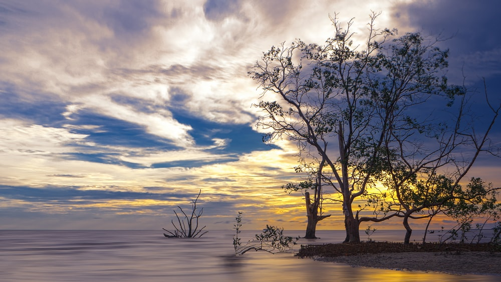 leafless tree on body of water during sunset