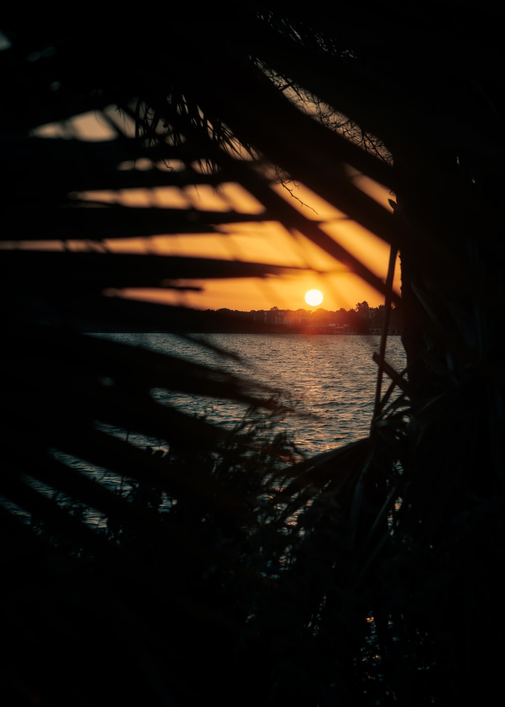 silhouette of plants near body of water during sunset