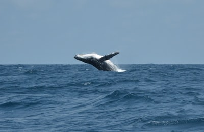 whale tail over blue sea during daytime gabon teams background