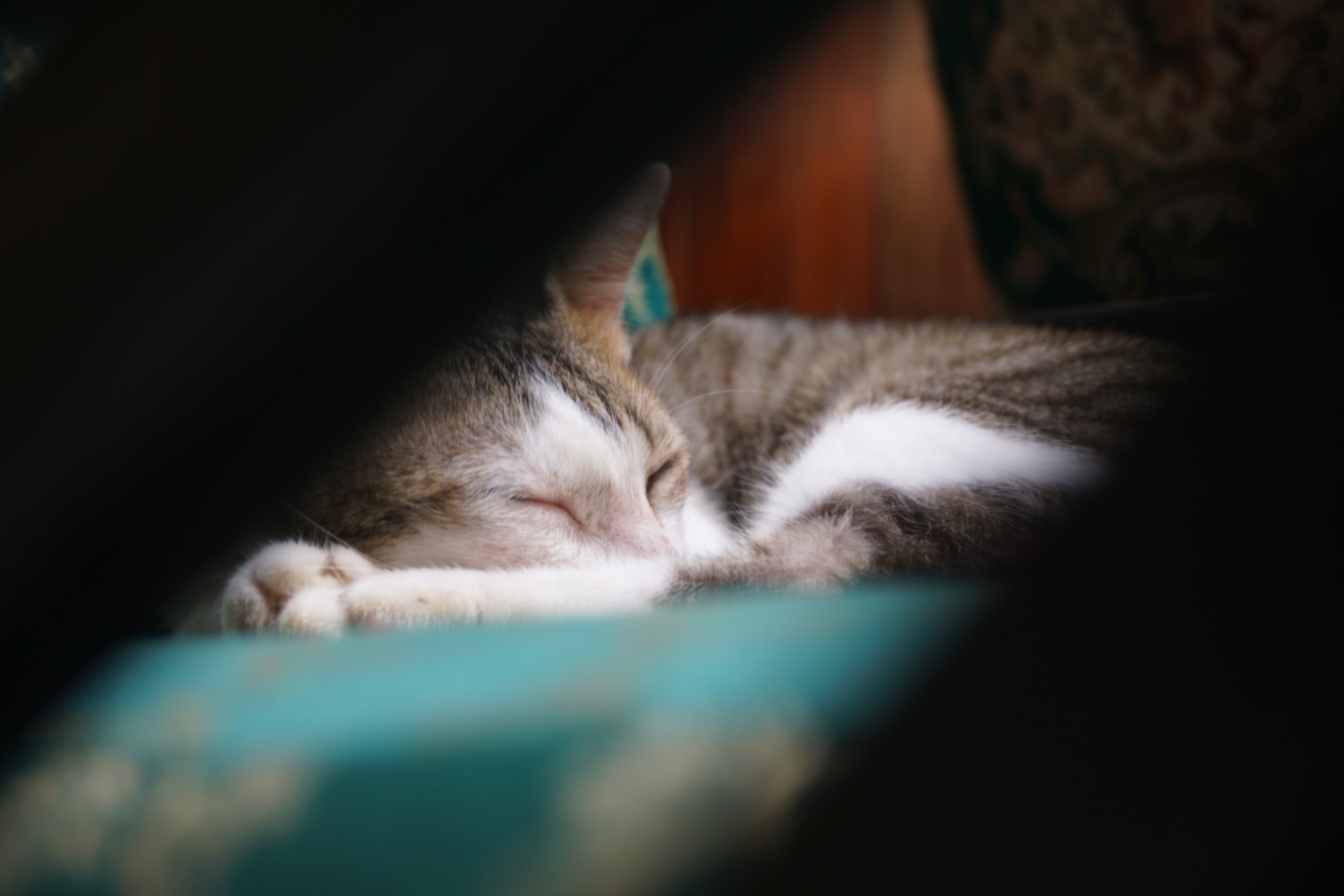 silver tabby cat lying on green textile