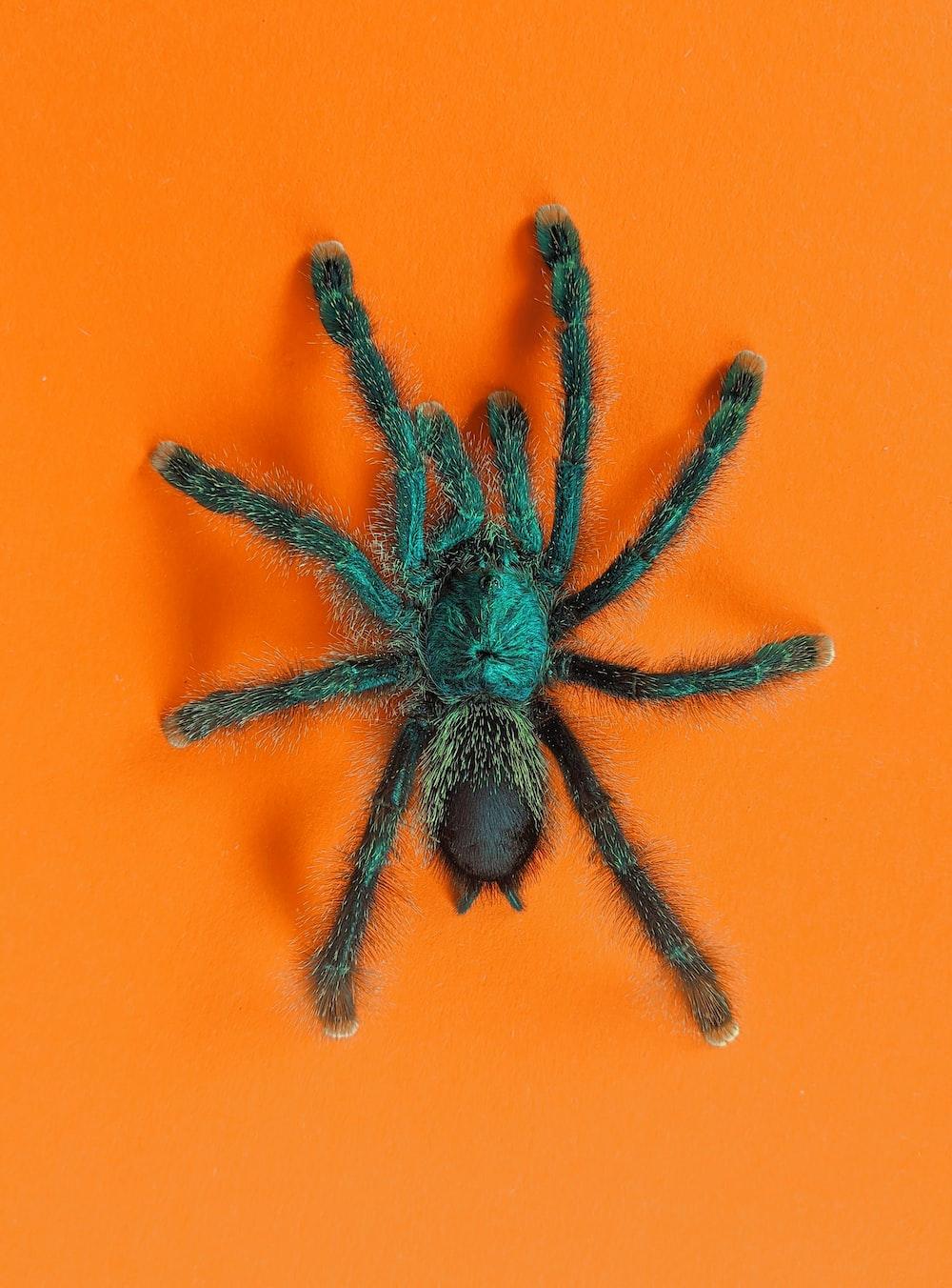 black spider on orange surface