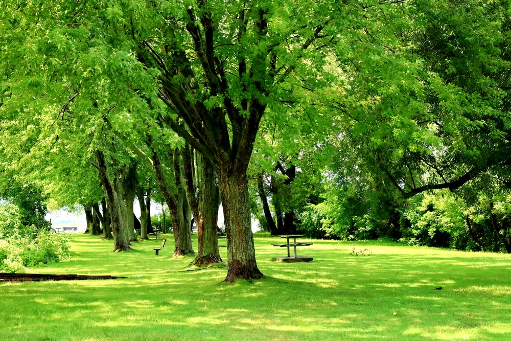 green grass field with trees