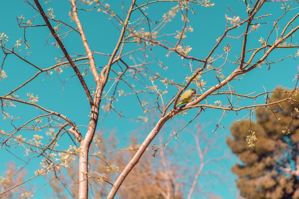 brown birds on brown tree branch during daytime
