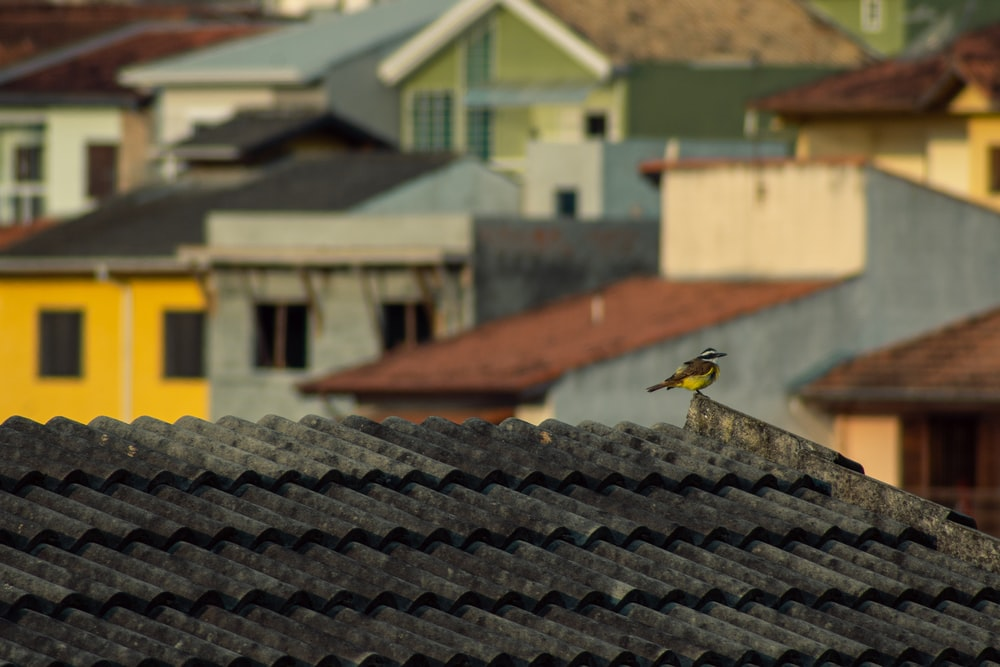 black and yellow bird on roof
