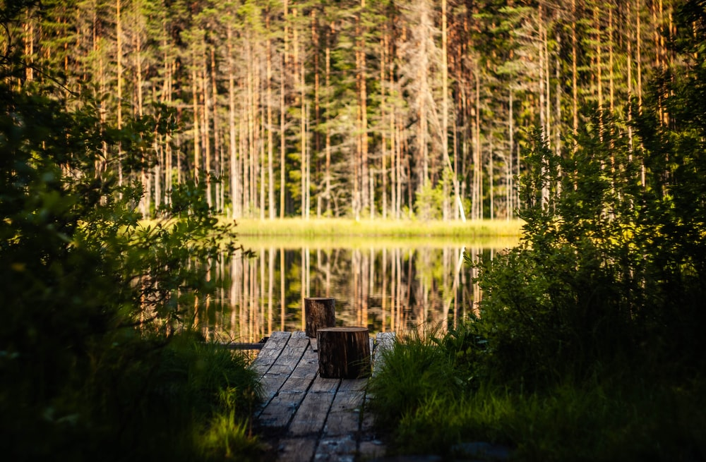 brown wooden bench near green trees and body of water during daytime