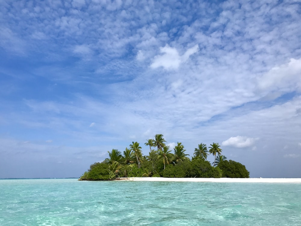 green palm trees on white sand beach under blue sky during daytime