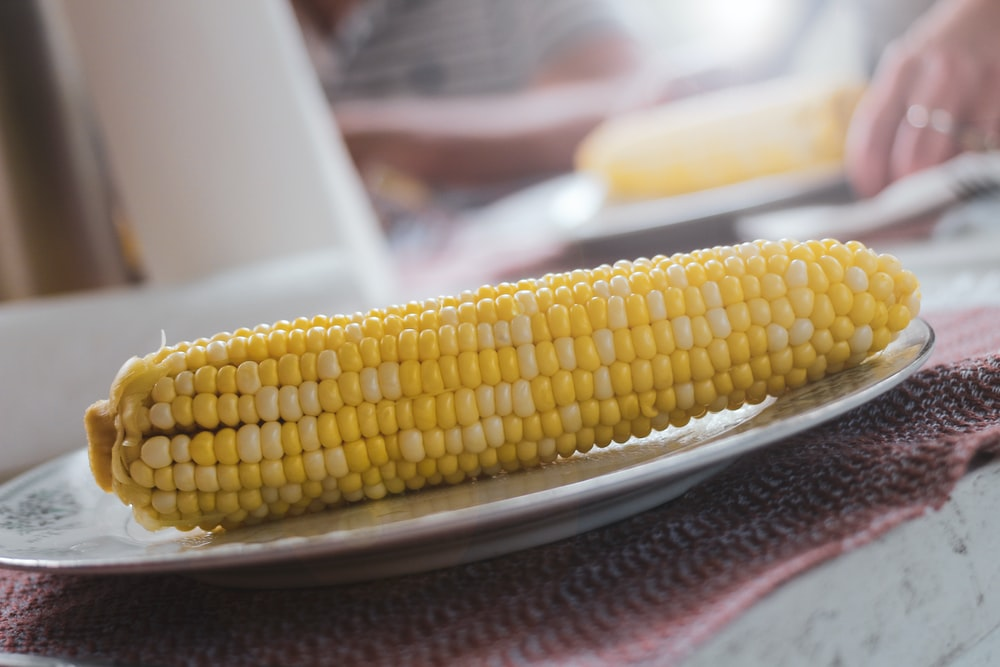 corn on white ceramic plate