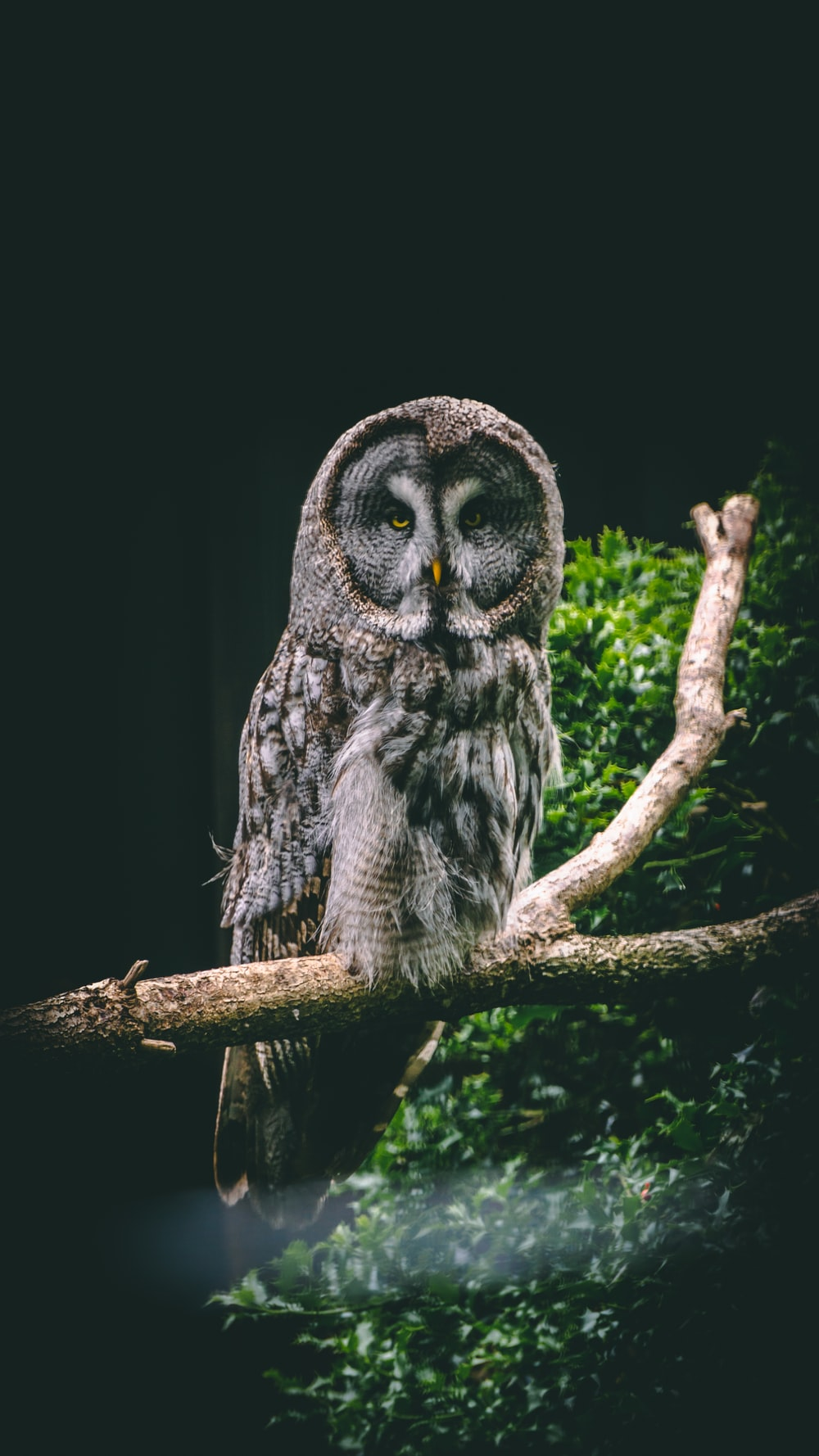 black and white owl on brown tree branch