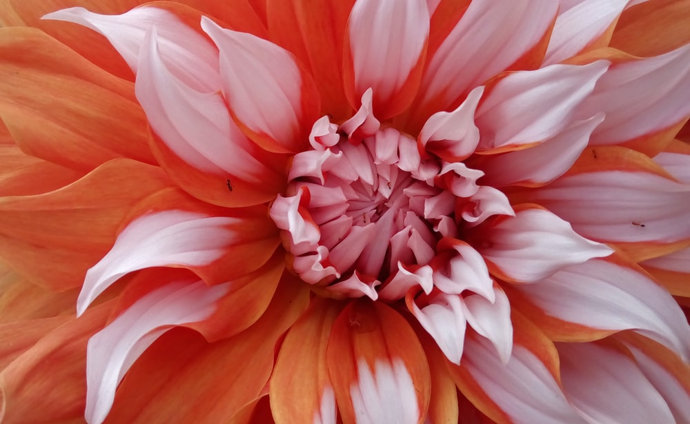 pink and orange flower in close up photography