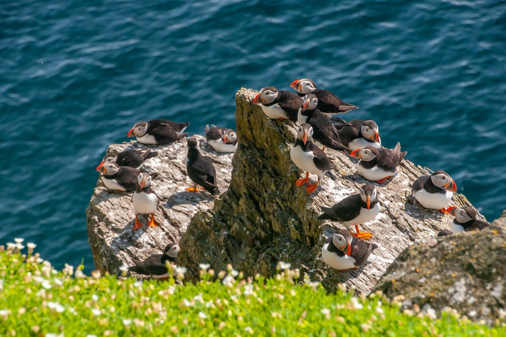 group of penguins on rocky shore during daytime